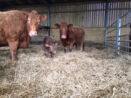 New arrivals down on the farm…