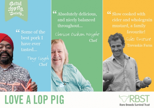 Love a Lop pig, love a great deal!
