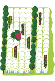Strawberry Fruit Tunnels